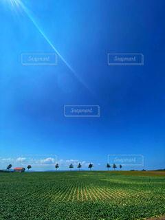 夏のメルヘン丘の写真・画像素材[4733130]