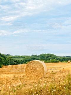 北海道の干し草ロールがある風景の写真・画像素材[4733311]