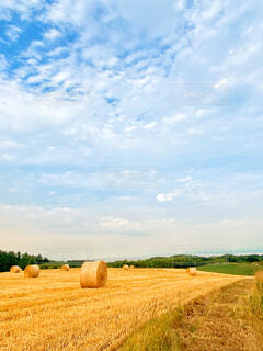 北海道の干し草ロールがある風景の写真・画像素材[4733314]