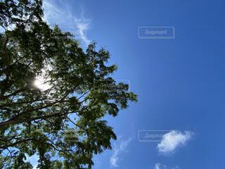 見上げた大きな木の写真・画像素材[4733358]