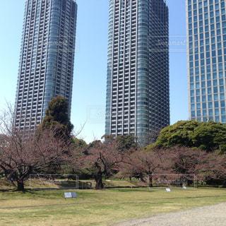 背景の木と芝生のフィールドを持つ大きな建物の写真・画像素材[1479495]