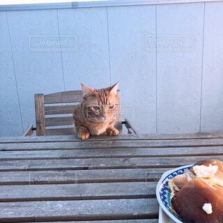建物の前でベンチに座って猫の写真・画像素材[1521607]