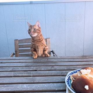 テラス猫の写真・画像素材[1601548]