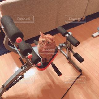 机の上に座っている猫の写真・画像素材[1603923]