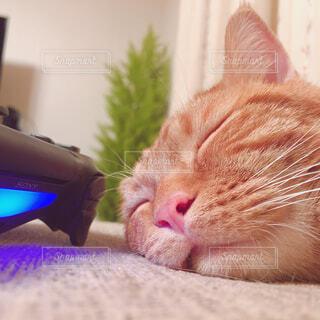 近くにピンクの毛布の上に横になっている猫のアップの写真・画像素材[1603925]