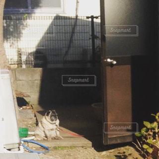 部屋に座っている犬の写真・画像素材[1623093]