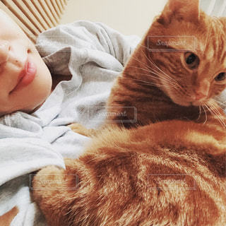 ベッドの上で眠っている猫の写真・画像素材[1659702]