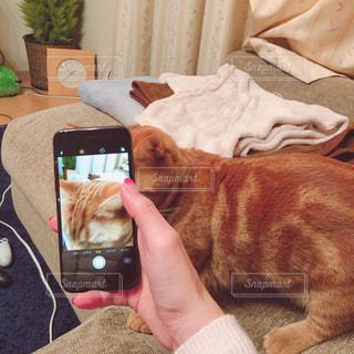 猫を持っている人の写真・画像素材[1693075]