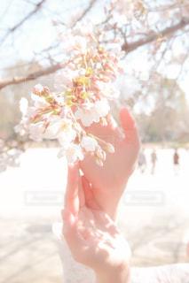 花を持っている人の写真・画像素材[3044257]