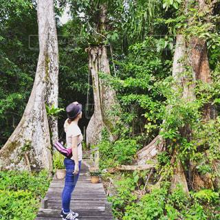 ジャングル散策の写真・画像素材[1594722]
