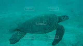 泳ぐウミガメの写真・画像素材[1473612]