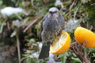 枝に座っている鳥の写真・画像素材[3037983]