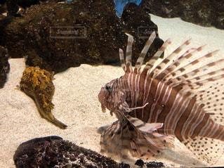 近くの岩の上の魚のアップの写真・画像素材[1473915]