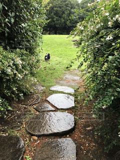 お散歩コースの写真・画像素材[1514674]