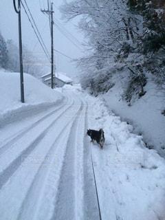 雪の側に木にパス対象斜面の写真・画像素材[1475372]