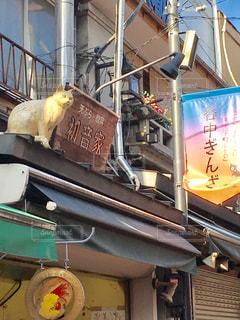 猫の街、谷中銀座の写真・画像素材[1476174]