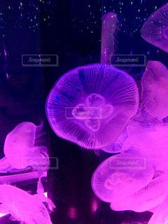 水中を漂うクラゲの写真・画像素材[3128430]