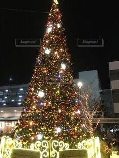 クリスマスツリーの写真・画像素材[3474468]
