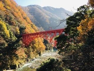 朝日を浴びる黒部渓谷鉄道の新山彦橋の写真・画像素材[3524453]
