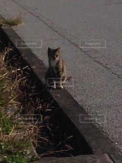 猫の写真・画像素材[47722]