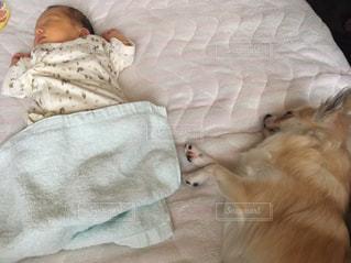 赤ちゃんと一緒に寝ている犬の写真・画像素材[1475824]