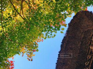 秋空ともみじグラデーションの写真・画像素材[1596697]