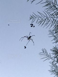 クモの写真・画像素材[1496092]