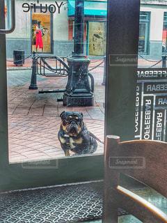 座っている犬の写真・画像素材[1480429]