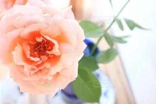 近くの花のアップの写真・画像素材[1478136]