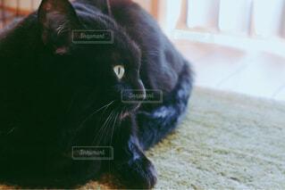横たわる猫のクローズアップの写真・画像素材[4213149]