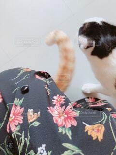 スカートの中に入り込む猫の写真・画像素材[4213150]