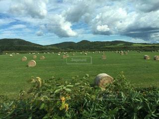 緑の大草原に点在する牧草ロールたちの写真・画像素材[1479350]