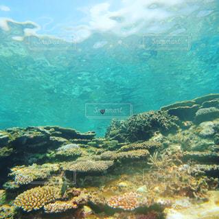 海の世界の写真・画像素材[1478911]