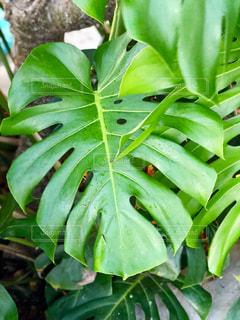 近くの緑の植物をの写真・画像素材[1478934]