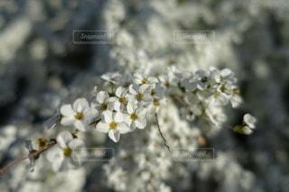 風景の写真・画像素材[48029]