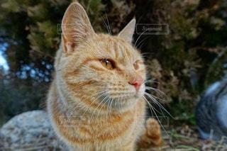 猫の写真・画像素材[55255]