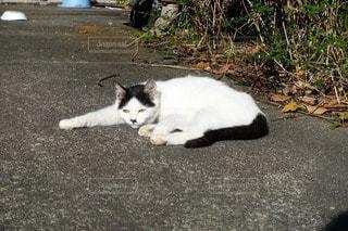 猫の写真・画像素材[55258]