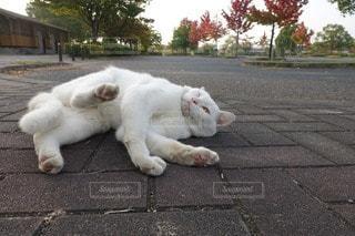 猫の写真・画像素材[55285]