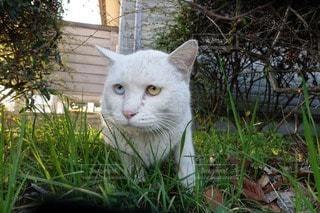 猫の写真・画像素材[55755]