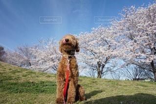 犬 - No.56179