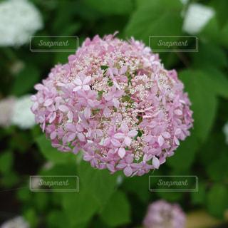 花の写真・画像素材[121842]