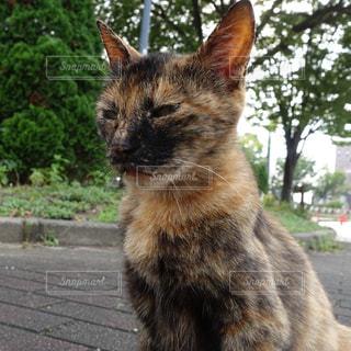 猫 - No.148315