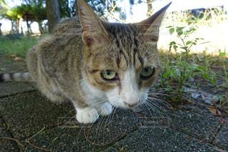 猫 - No.256300