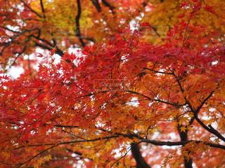近くの木のアップの写真・画像素材[1553671]