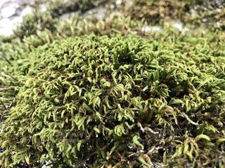 苔の写真・画像素材[1480974]