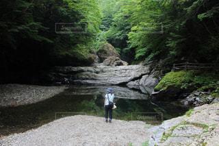 森の中で佇むの写真・画像素材[1489720]