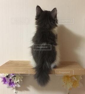 猫階段の上に後ろ姿で座っている子猫の写真・画像素材[1483669]