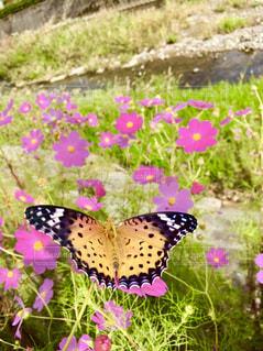 花と蝶の写真・画像素材[1482612]