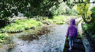 川の飛び石を渡る少女の写真・画像素材[1484976]