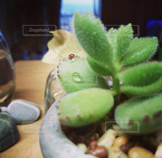 テーブルの上の鉢植え多肉植物の写真・画像素材[1488869]